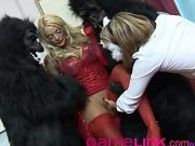 Two Gorillas , a Cat Masked Nurse , and a Bit Tit Blonde