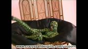 Glamourstar strip like a flexi snake (movie)