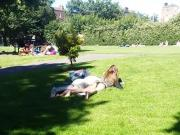 Dublin Park Panties