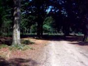 BBW in short skirt in the woods