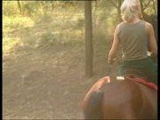 TOP-HORSE