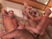 Bear Voyage 2