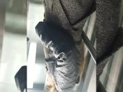 Elevator Upskirt - black panty