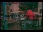 buttersidedown - SwedishErotica - Sensuous Songbird