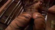 Tiffany Rayne - Tiger Stripes