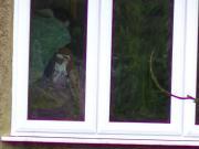 voyeur neighbour