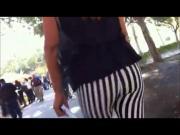 zebra ass