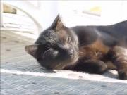 The ship's kitty
