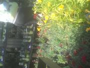 bbw garden center