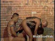 Black hard studs