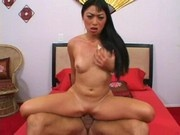 Mr Chews Asian Beaver - Lena Lang - Xerowings