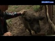 Olsay-cowboy gangbang 1-2