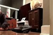 Cat Knocks Monitor on Dude's Face