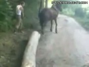 Idiot Gets Horse Kicked To The Face