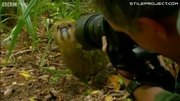 Rare Parrot Shags Photographer's Head