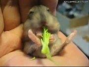 Mocha Eats His First Broccoli - Look At His Feet Twirl!