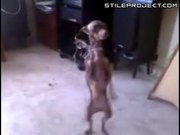 Doggie Dancing To Spanish Music