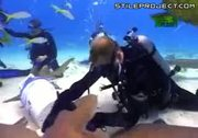 idiot kisses a nurse shark on the mouth and it bites his lip off