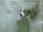 Dog Goes Fishing