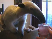Anteater Drinks Sparkling Juice