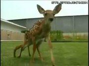 mutant deer with 6 legs