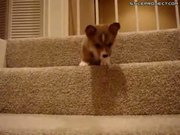 Puppy Scared To Go Down Stairs