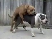 Dog Pukes While Fucking