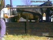 Horse kicks guy branding him