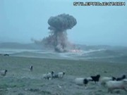 Sheeps Run From Huge Bomb Explosion