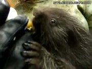 Feeding A Baby Porcupine