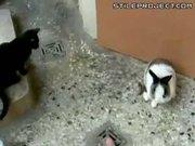 Horny Bunny Vs. Cat