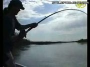 sport fisherman catches an insanely huge fish