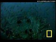 Deep Sea Creatures In Japan