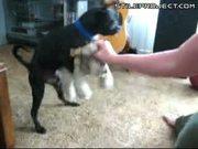 Dog Frankie Likes To Fuck