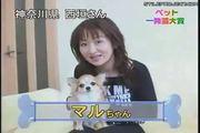 Japanese Dog Tricks