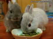 Black Bunny & White Bunny