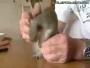 Man Has Pet Squirrel Nutty