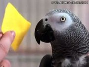 Very Smart Parrot