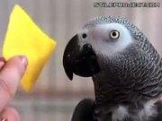 Very Smart Parrot