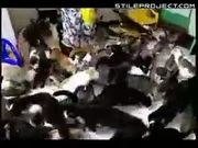 Crazy Russian Cat Lady Owns 130 Cats