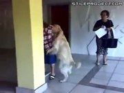 DOG HUMPS OLD LADY
