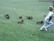 Adorable Litter Of Puppies Chases Boy