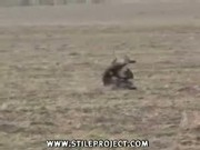 hawk VS baby deer