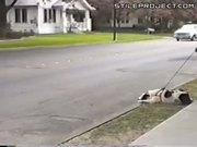 Cars Make Dog Spin