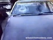 Idiots smashes car windshield with his head till it bleeds