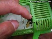 Large Hornet On Hand