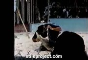idiot puts his head inside a crocodiles mouth and it bites down