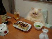 Cat's Dinner Death Stare