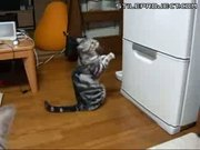Cat Begs For Food From Fridge