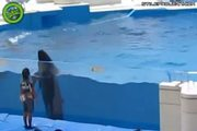 dolphin fail! dolphin jumps out of the pool onto the concrete
